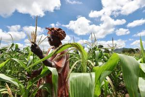 FAO on Agricultural Cooperatives in Malawi