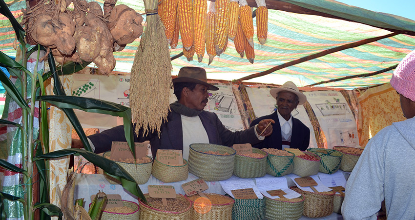 Farmer groups display their products in Lovasoa, Madagascar